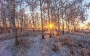 Обои снег, мороз, деревья, солнце, иней