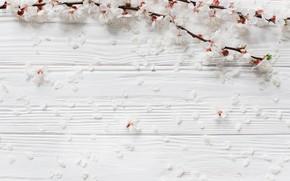 Картинка Цветы, Весна, Ветки
