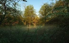 Картинка лес, лето, поляна, растительность, Into the Woods
