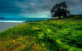 Картинка море, зелень, небо, тучи, дерево, побережье, горизонт, Португалия, папоротник, Portugal, Азорские острова, Azores