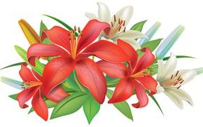 Картинка лилии, рыжие, оранжевые, векторная графика