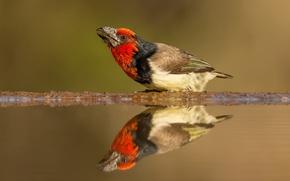 Картинка животные, вода, отражение, фон, птица