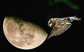 Обои полет, ночь, сова, луна