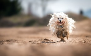 Картинка собака, бег, природа