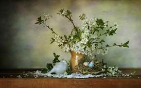 Картинка вишня, яйца, гнездо, птичка