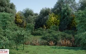 Картинка лето, природа, растительность, овраг, the pond
