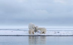 Картинка зима, животные, белый, небо, вода, снег, пейзаж, природа, берег, ледник, медведь, семья, медведи, четверо, белая, …