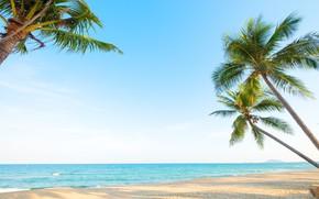 Картинка море, пляж, закат, пальмы, Тропики