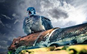 Картинка крыша, фон, птица