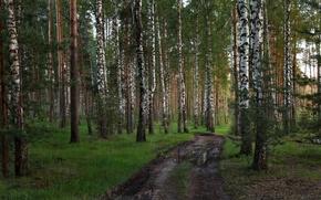 Картинка дорога, лес, Тверская область