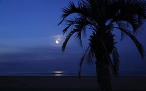 Картинка море, небо, ночь, пальма, луна