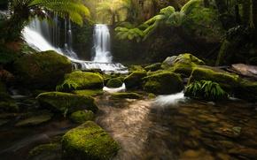 Картинка природа, река, камни, водопад, джунгли, Тасмания
