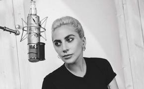 Обои студия, фото, 2016, музыкальный альбом, Collier Schorr, макияж, Lady GaGa, прическа, футболка, певица, Леди Гага, ...