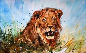 Обои природа, морда, лев, грива, пасть