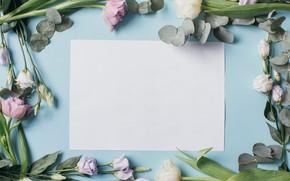 Картинка Лист, Цветы, Бумага, Тюльпаны, Фон, Эустома
