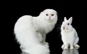 Картинка кошка, взгляд, портрет, кролик, белая, чёрный фон, пушистая, Наталья Ляйс