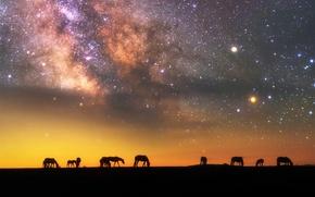 Обои силуэты, звезды, лошади, небо, млечный путь, ночь, вечер