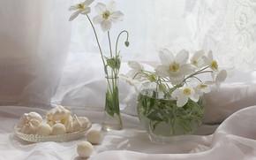 Картинка цветы, растения, сладости, натюрморт, анемоны