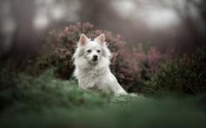 Картинка собака, боке, вереск