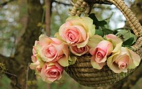 Картинка лето, листья, деревья, цветы, ветки, природа, фон, роза, розы, букет, лепестки, сад, нежные, розовые, корзинка, …