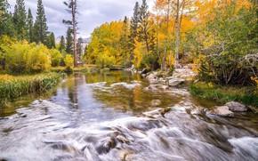 Картинка осень, река, поток