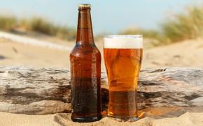 Картинка песок, пляж, пена, солнце, капли, стакан, бутылка, пиво, мокрая, коряга, боке