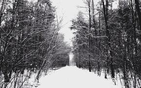 Картинка Зима, Деревья, Снег, Мороз, Дорожка, Winter, Frost, Snow, Trees, Path