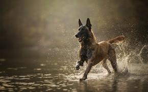 Картинка вода, друг, собака