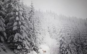 Картинка зима, лес, снег, друг, собака