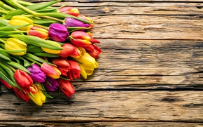 Обои весна, beautiful, fresh, colorful, wood, тюльпаны, tulips, bright, букет, spring, flowers, цветы