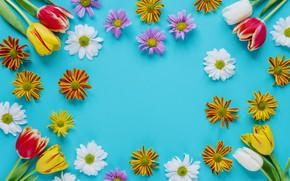 Обои цветы, весна, colorful, Пасха, тюльпаны, хризантемы, flowers, tulips, spring, Easter, eggs, decoration, Happy, яйца крашеные