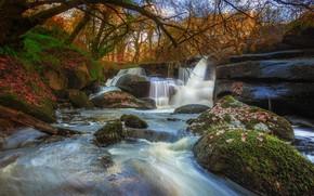 Картинка осень, лес, листья, природа, камни, водопад, мох, поток