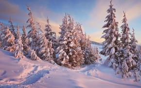 Картинка Природа, Зима, Деревья, Снег