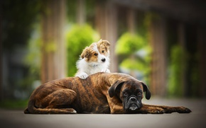 Обои две собаки, друзья, Tini, Sunny