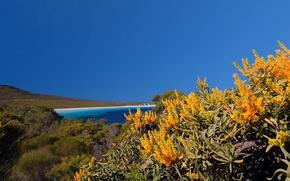 Картинка море, цветы, Австралия, Cape Le Grand National Park, нуитсия