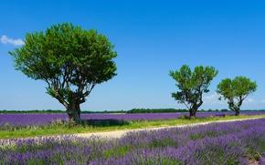 Картинка поле, лето, небо, солнце, деревья, Франция, лаванда, Valensole