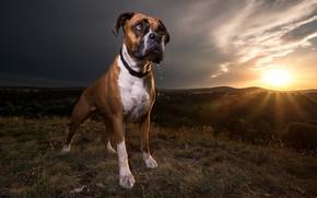 Картинка закат, друг, собака