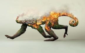 Картинка лес, пожар, коллаж, обезьяна