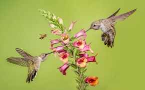Картинка цветок, пчела, колибри