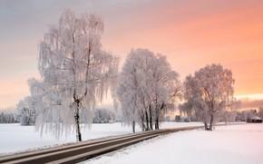 Обои зима, иней, дорога, деревья, мороз