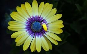 Обои природа, цветок, лепестки