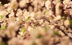Картинка цветы, вишня, япония, весна, сакура, цветение, insta:kportfolio