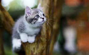 Обои милый, котенок, фон