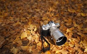 Картинка осень, листья, фотоаппарат, Olympus OM-D