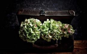 Картинка цветы, чемодан, винтаж, гортензия, букеты