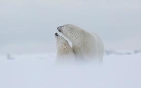 Обои зима, белый, небо, снег, любовь, природа, туман, фон, настроение, медведь, семья, медведи, дымка, белая, медвежонок, ...