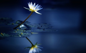 Картинка вода, отражение, лилия