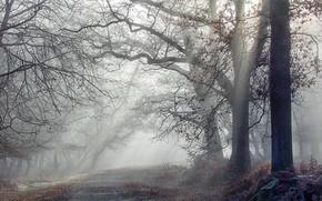 Обои лес, утро, дорога, туман