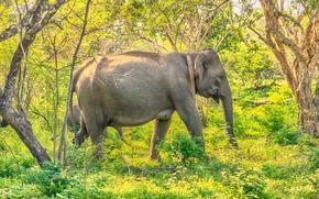 Картинка зелень, лес, трава, солнце, деревья, слоны, кусты, Шри-Ланка, Yala National Park