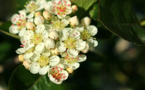 Картинка красота, весна, цветение, белые цветы